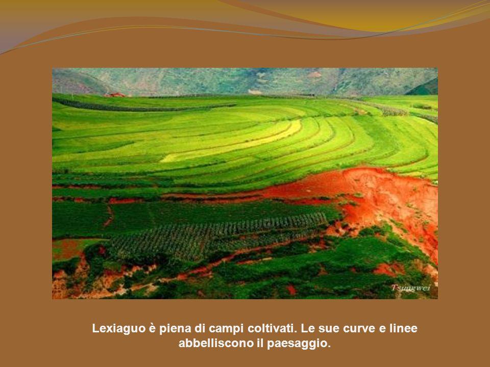 Lexiaguo è piena di campi coltivati. Le sue curve e linee