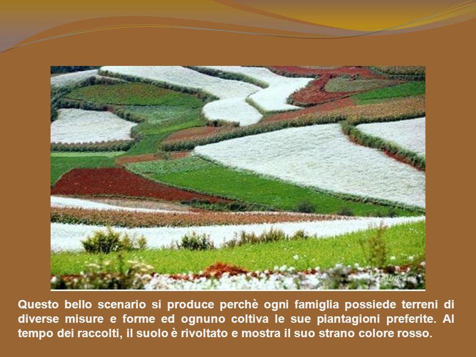 Questo bello scenario si produce perchè ogni famiglia possiede terreni di diverse misure e forme ed ognuno coltiva le sue piantagioni preferite.