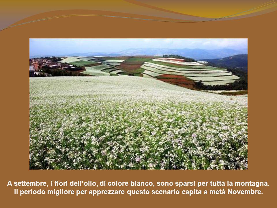 A settembre, i fiori dell'olio, di colore bianco, sono sparsi per tutta la montagna.