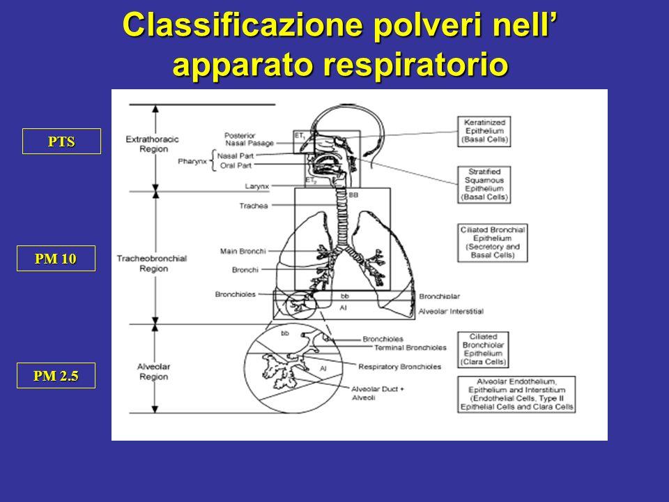 Classificazione polveri nell' apparato respiratorio