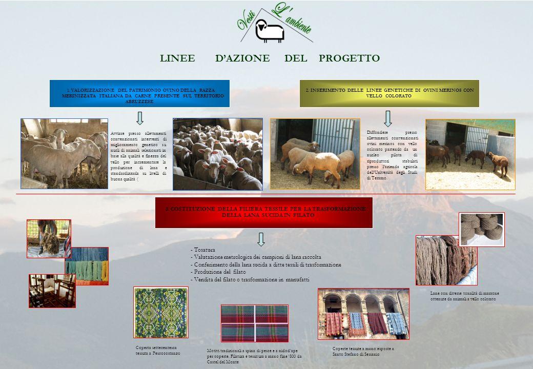 LINEE D'AZIONE DEL PROGETTO