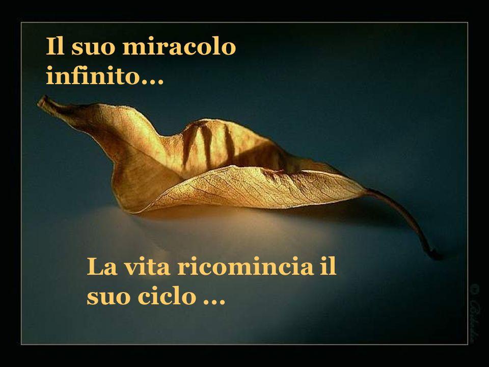 Il suo miracolo infinito...