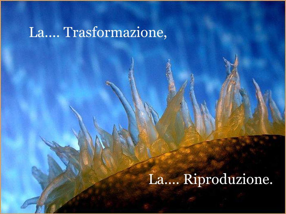 La.... Trasformazione, La.... Riproduzione.