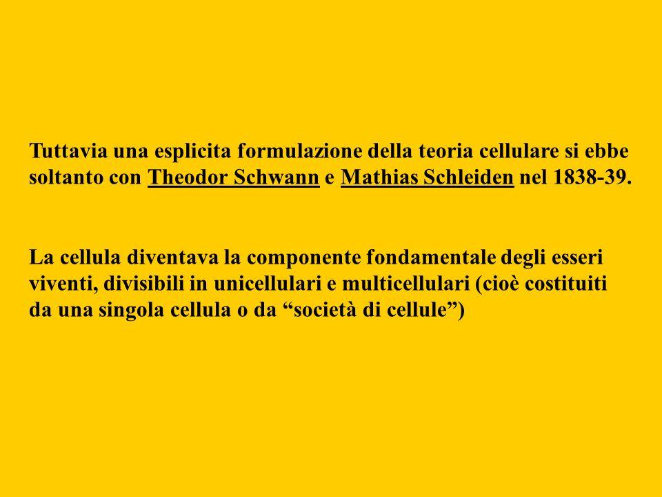 Tuttavia una esplicita formulazione della teoria cellulare si ebbe soltanto con Theodor Schwann e Mathias Schleiden nel 1838-39.
