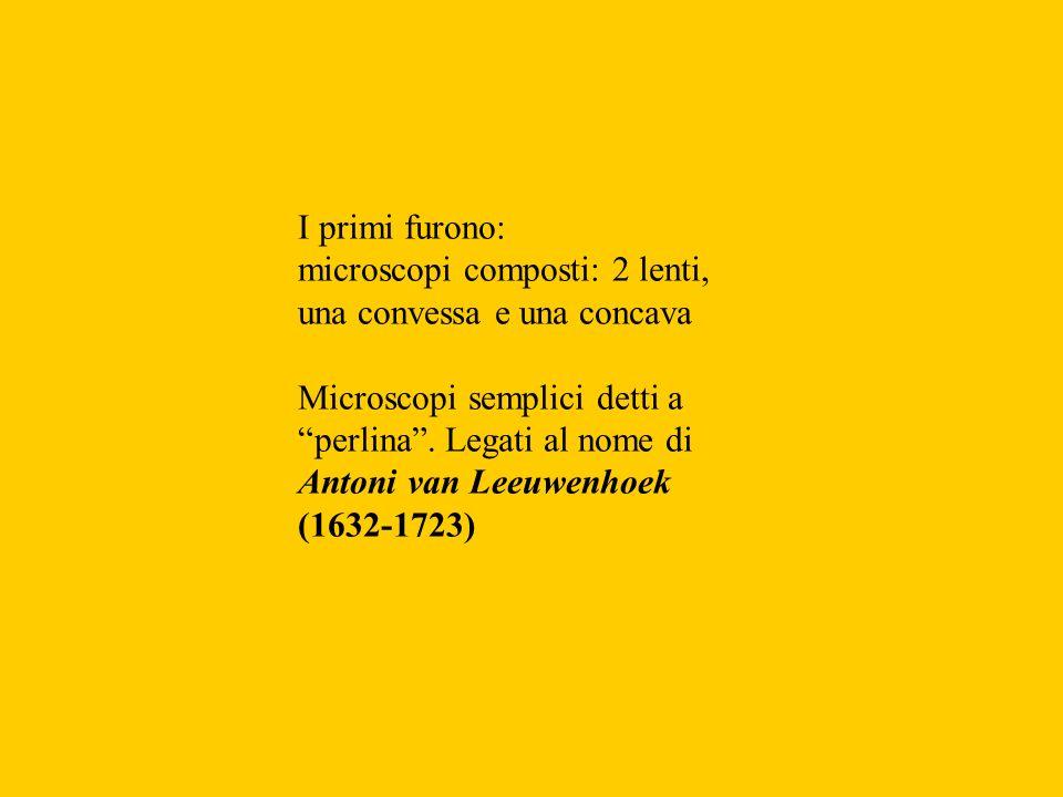 I primi furono:microscopi composti: 2 lenti, una convessa e una concava. Microscopi semplici detti a perlina . Legati al nome di.