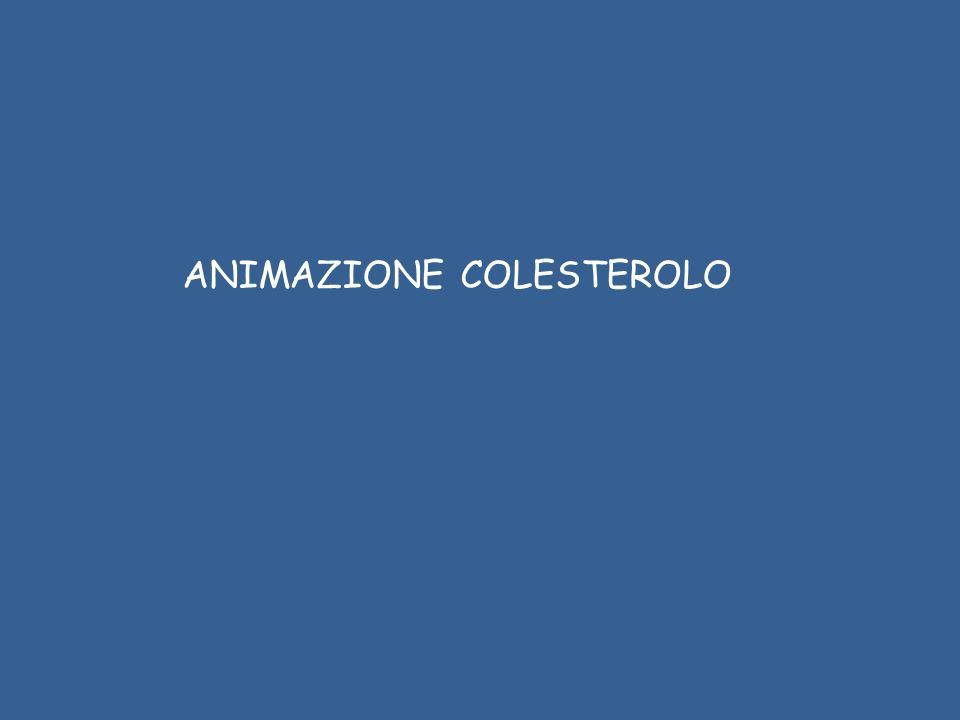 ANIMAZIONE COLESTEROLO