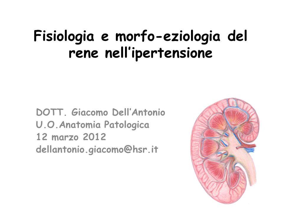 Fisiologia e morfo-eziologia del rene nell'ipertensione