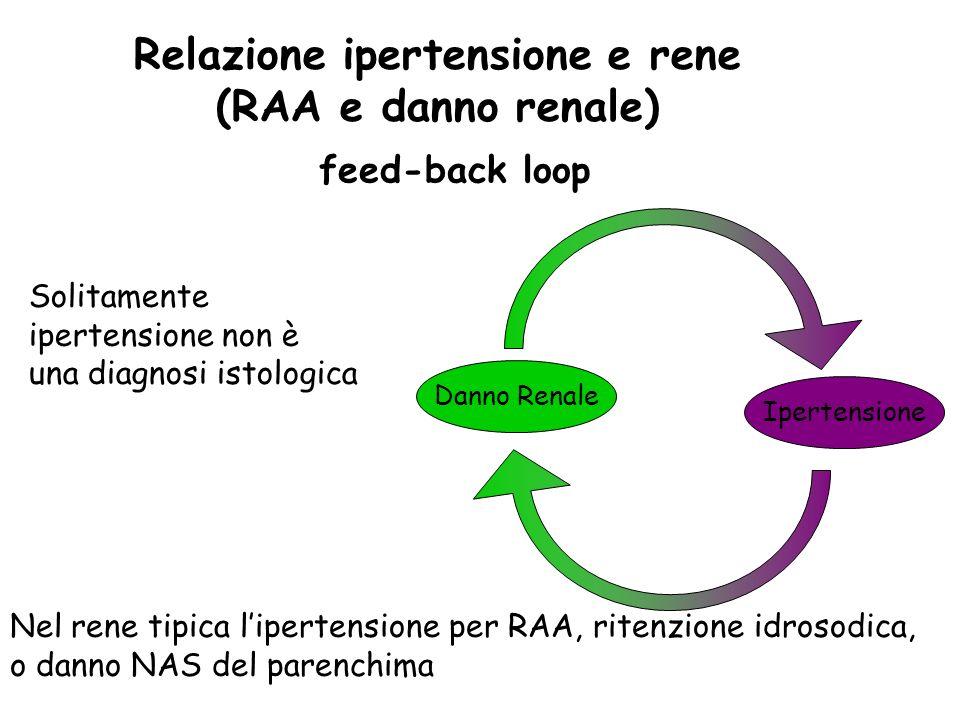 Relazione ipertensione e rene