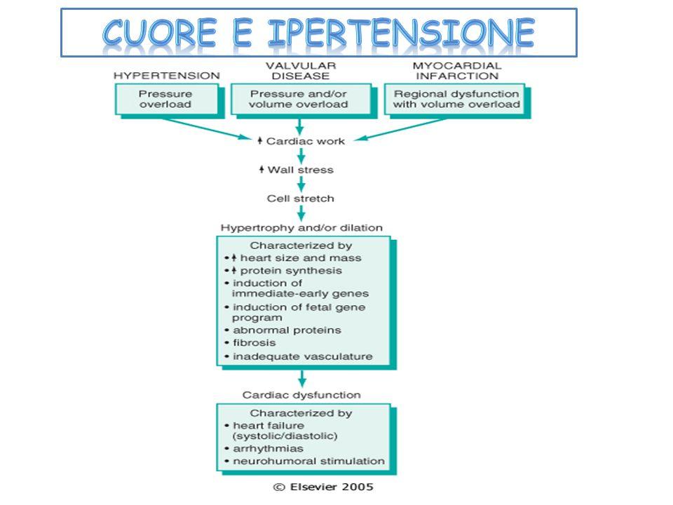 CUORE E IPERTENSIONE