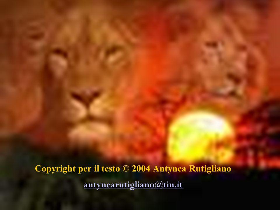 Copyright per il testo © 2004 Antynea Rutigliano