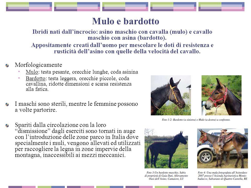Gestione alimentare dell asino ppt scaricare for Asino e cavalla