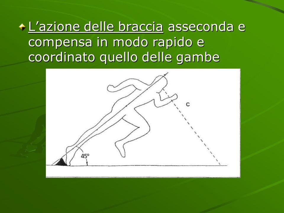 L'azione delle braccia asseconda e compensa in modo rapido e coordinato quello delle gambe
