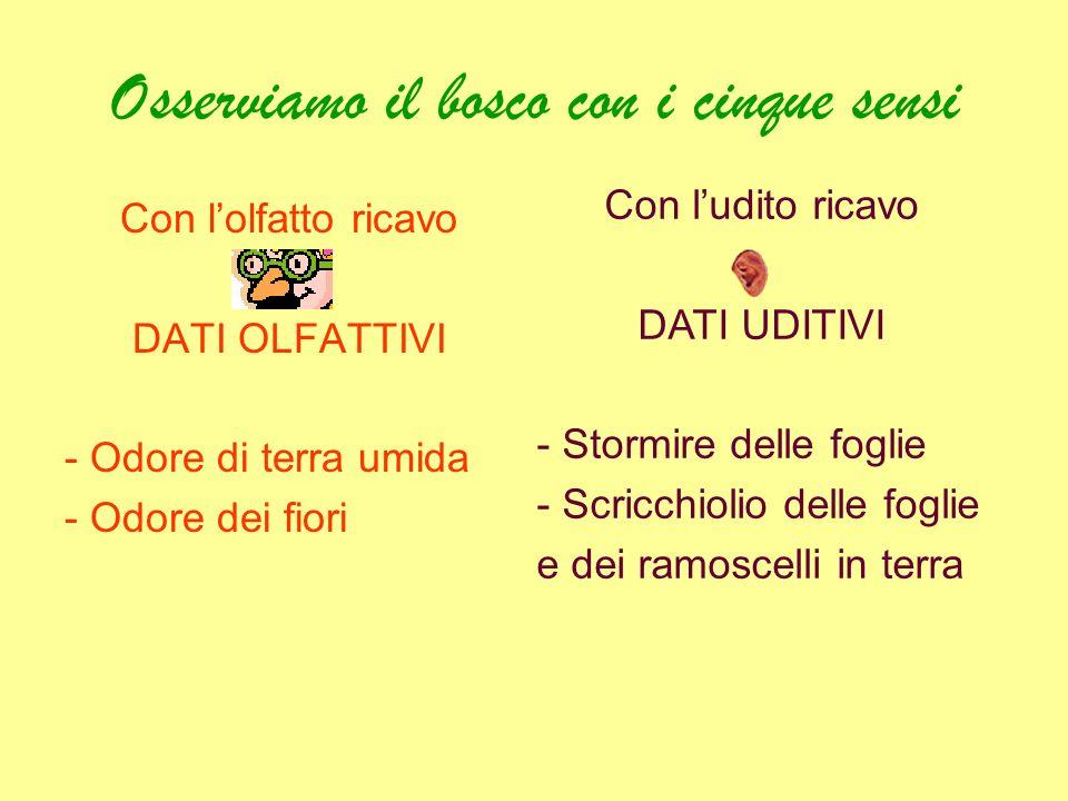"""Amato Scuola elementare di Cailungo """"Arcobaleno"""" Progetto didattico  HR28"""