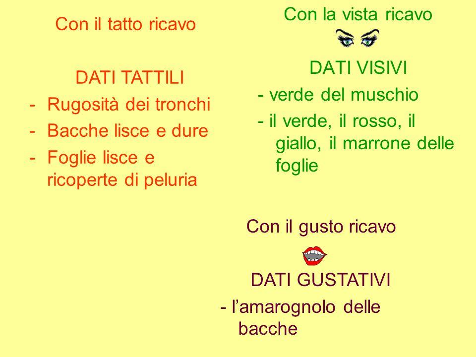 Con la vista ricavo DATI VISIVI. - verde del muschio. - il verde, il rosso, il giallo, il marrone delle foglie.