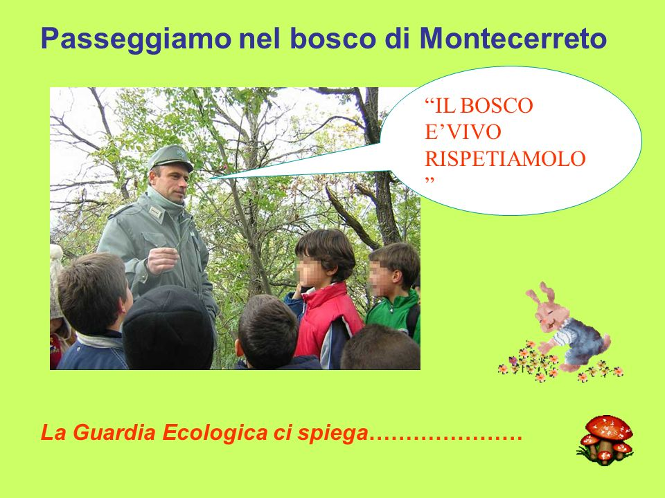 Passeggiamo nel bosco di Montecerreto