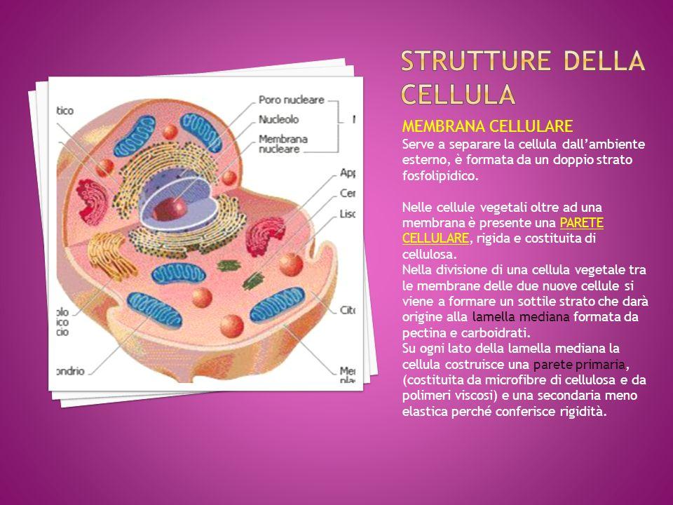 Strutture della cellula