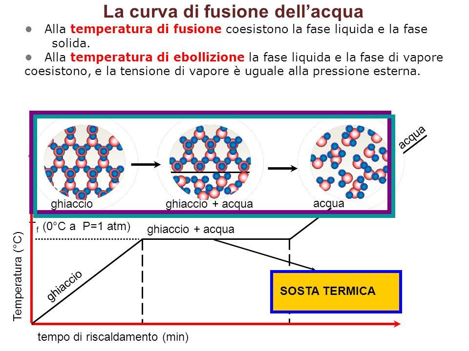 La curva di fusione dell'acqua • Alla temperatura di fusione coesistono la fase liquida e la fase solida. • Alla temperatura di ebollizione la fase liquida e la fase di vapore coesistono, e la tensione di vapore è uguale alla pressione esterna.
