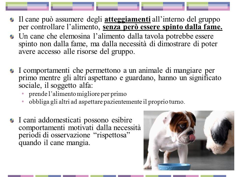 Disturbi nel comportamento alimentare del cane ppt scaricare - Quando fare il primo bagno al cane ...