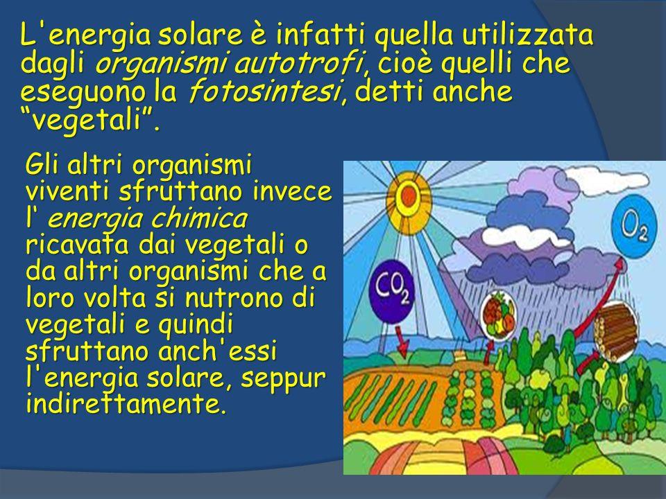 L energia solare è infatti quella utilizzata dagli organismi autotrofi, cioè quelli che eseguono la fotosintesi, detti anche vegetali .