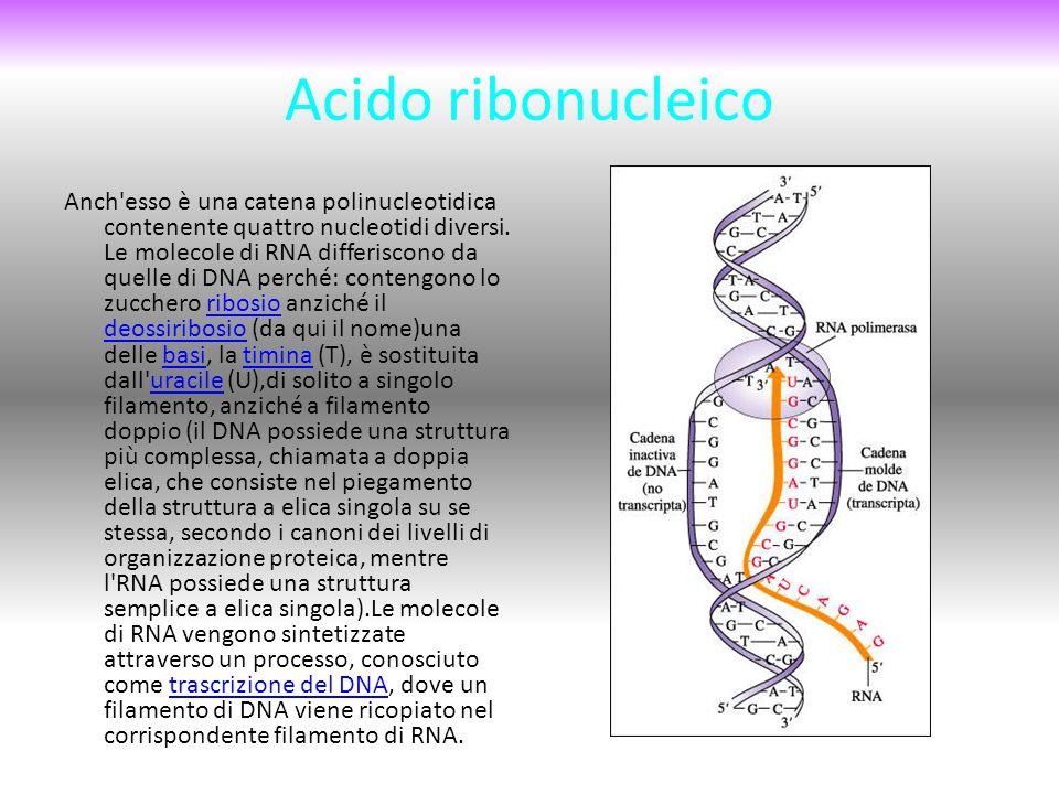 Acido ribonucleico