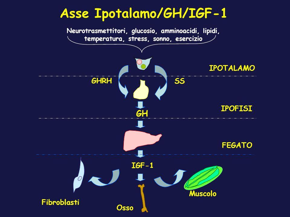 Asse Ipotalamo/GH/IGF-1