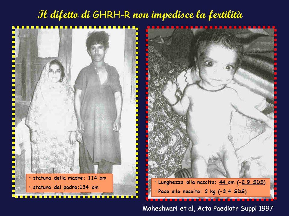 Il difetto di GHRH-R non impedisce la fertilità