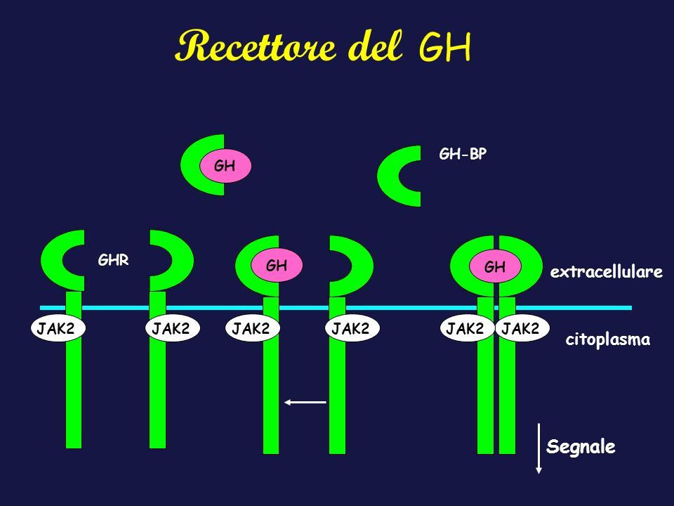 Recettore del GH Segnale extracellulare citoplasma GH-BP GH GHR GH GH
