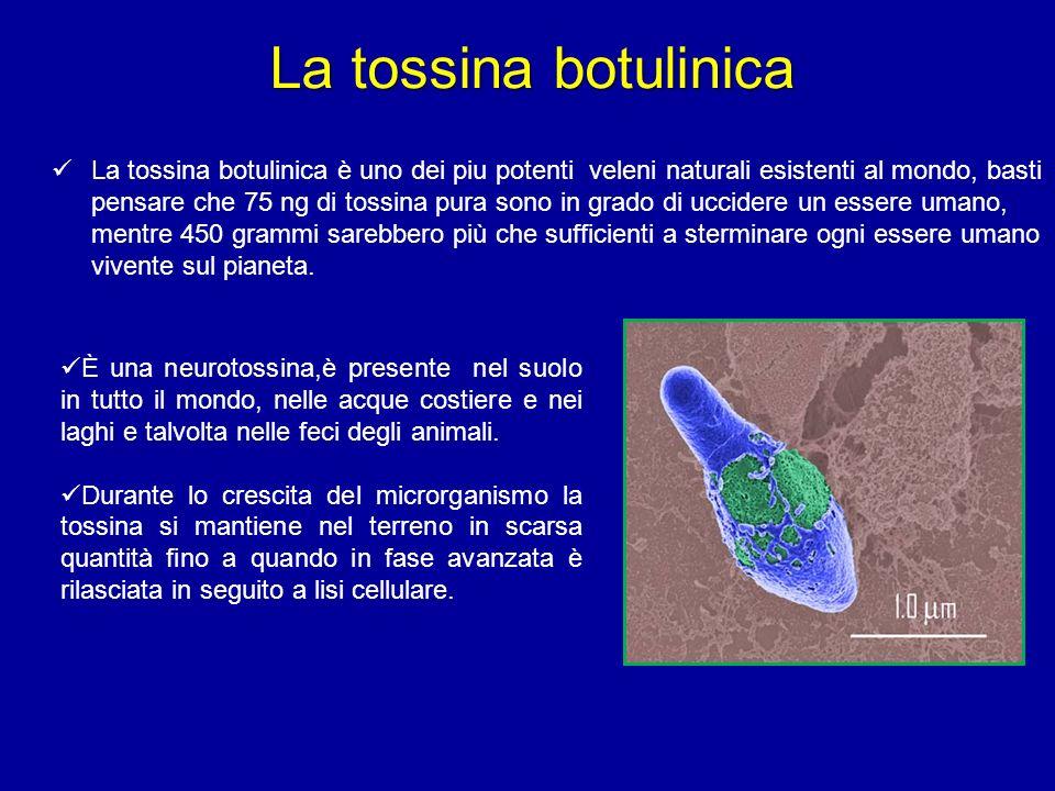 La tossina botulinica