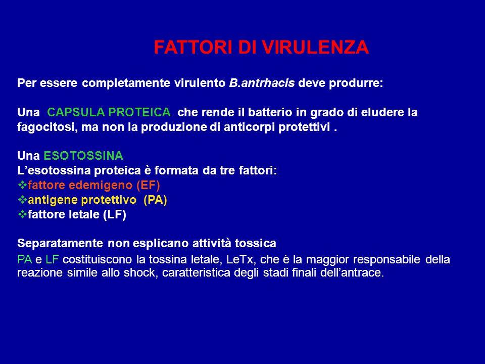 FATTORI DI VIRULENZA Per essere completamente virulento B.antrhacis deve produrre:
