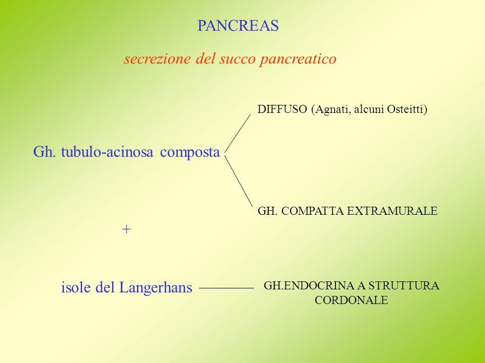 secrezione del succo pancreatico