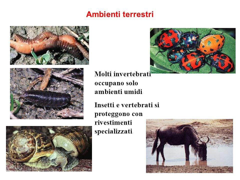 Ambienti terrestri Molti invertebrati occupano solo ambienti umidi