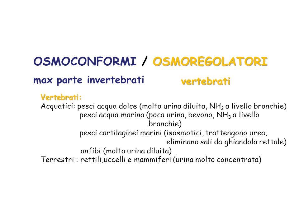 OSMOCONFORMI / OSMOREGOLATORI
