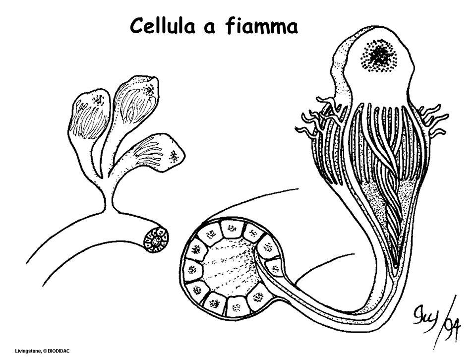 Cellula a fiamma