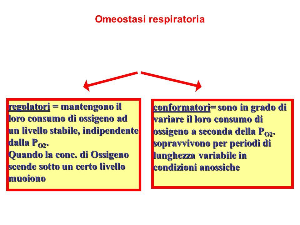 Omeostasi respiratoria
