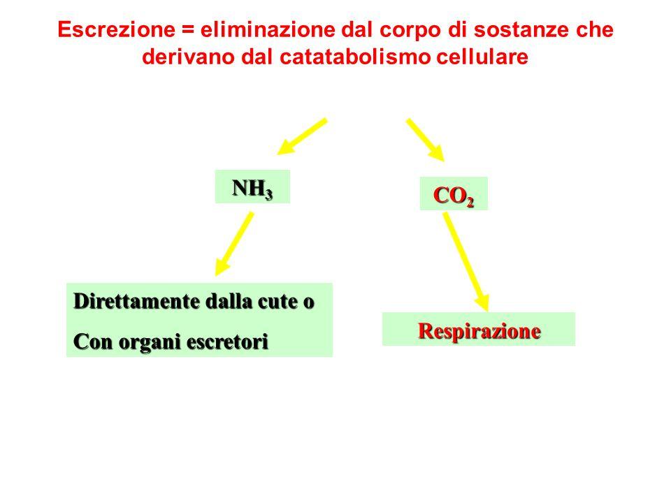 Escrezione = eliminazione dal corpo di sostanze che derivano dal catatabolismo cellulare