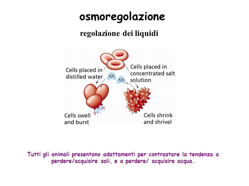 osmoregolazione regolazione dei liquidi