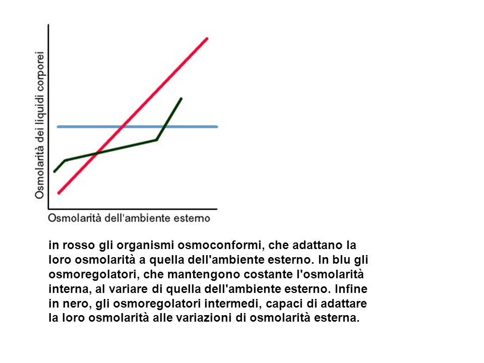 in rosso gli organismi osmoconformi, che adattano la loro osmolarità a quella dell ambiente esterno.