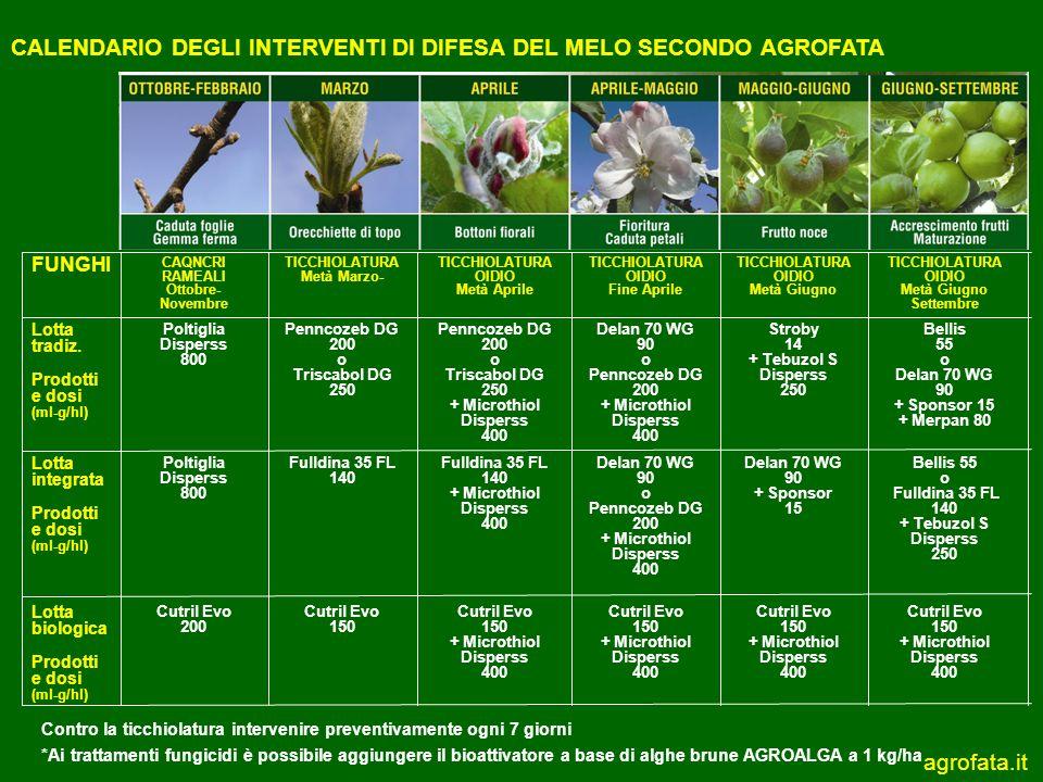 Calendario Trattamenti Olivo Biologico.Calendario Degli Interventi Di Difesa Del Melo Secondo Agrofata