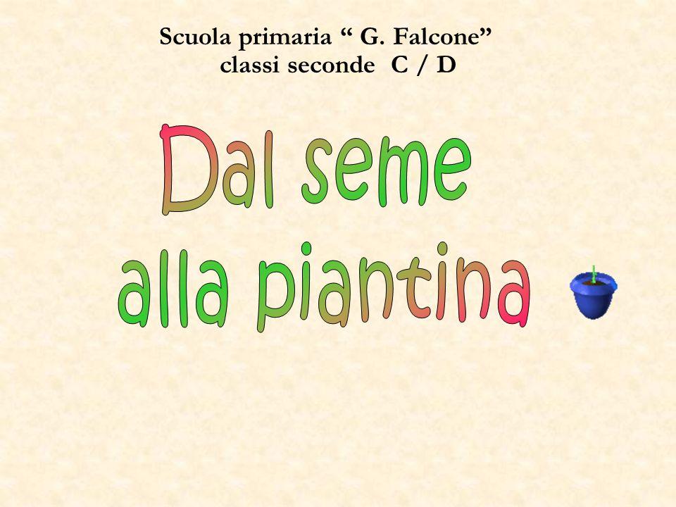 Scuola primaria G. Falcone