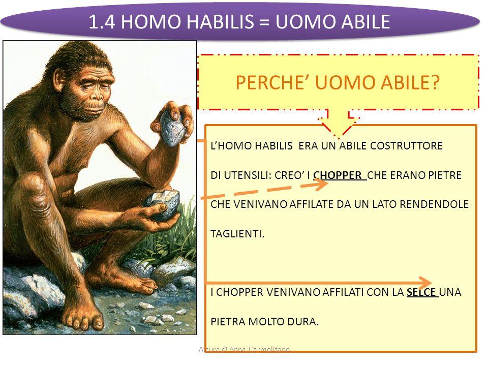 1.4 HOMO HABILIS = UOMO ABILE