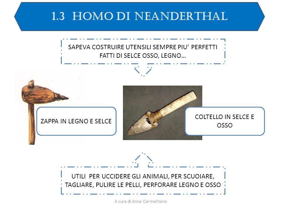 1.3 HOMO DI NEANDERTHAL SAPEVA COSTRUIRE UTENSILI SEMPRE PIU' PERFETTI FATTI DI SELCE OSSO, LEGNO…