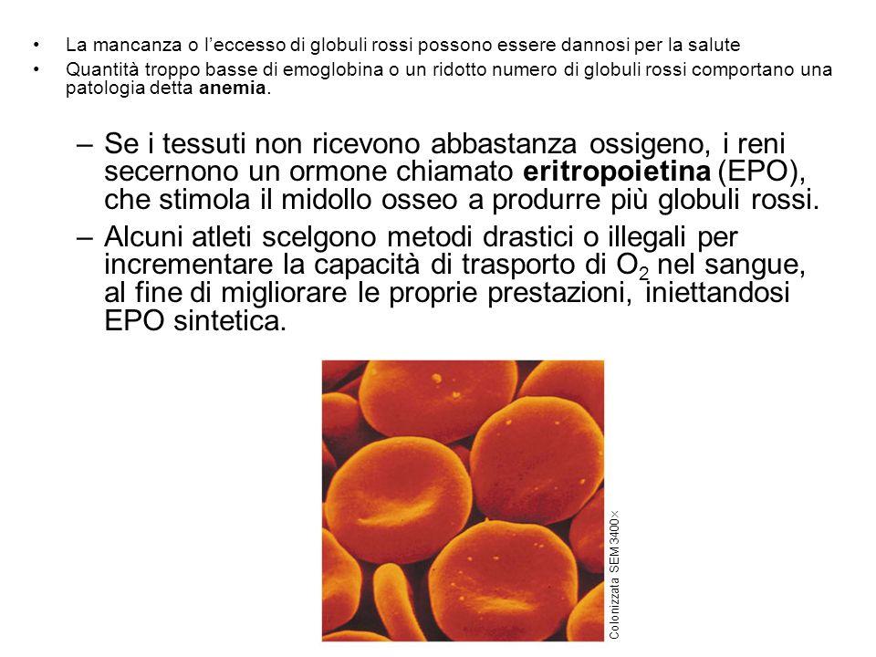 La mancanza o l'eccesso di globuli rossi possono essere dannosi per la salute