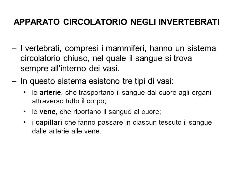 APPARATO CIRCOLATORIO NEGLI INVERTEBRATI