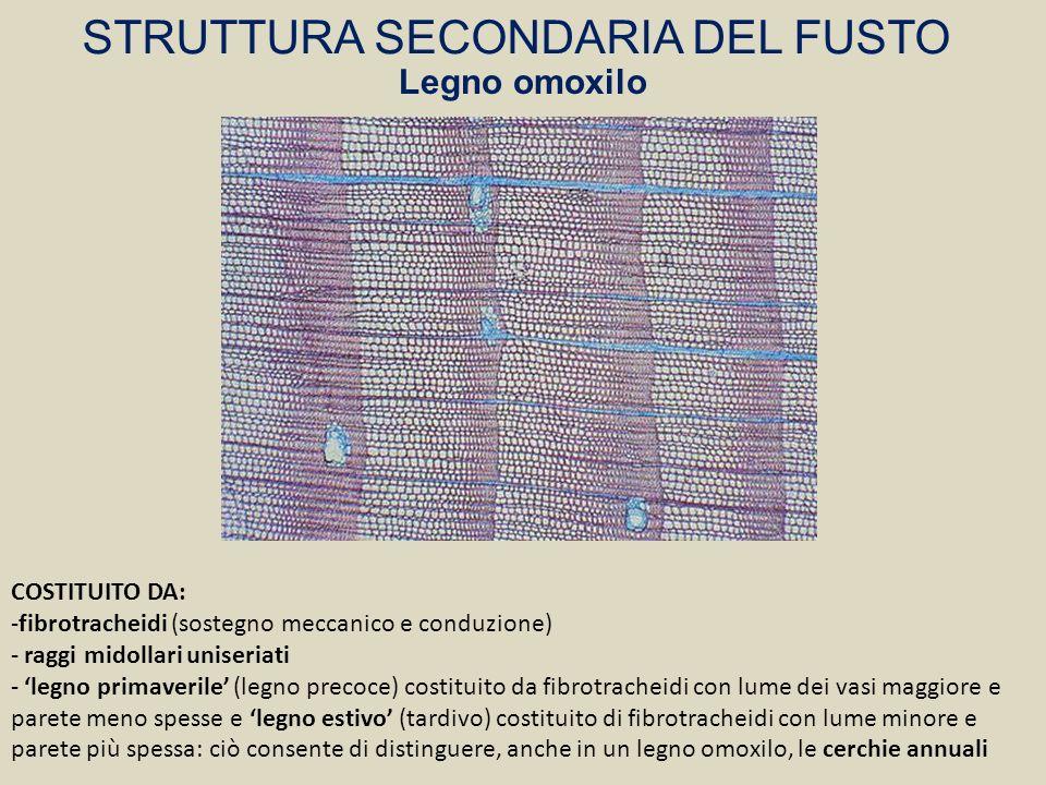 STRUTTURA SECONDARIA DEL FUSTO