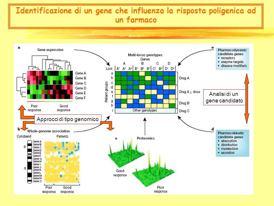 effetti non genomici degli steroidi