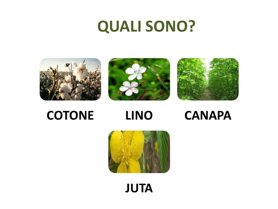 QUALI SONO COTONE LINO CANAPA JUTA