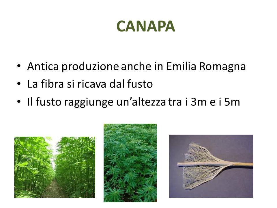 CANAPA Antica produzione anche in Emilia Romagna