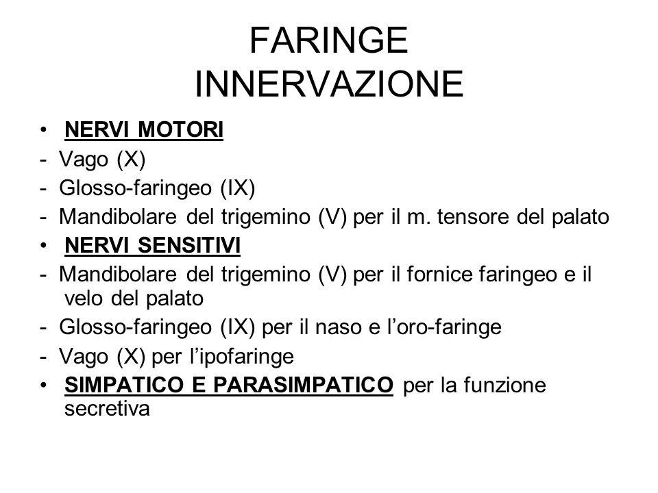 FARINGE INNERVAZIONE NERVI MOTORI - Vago (X) - Glosso-faringeo (IX)