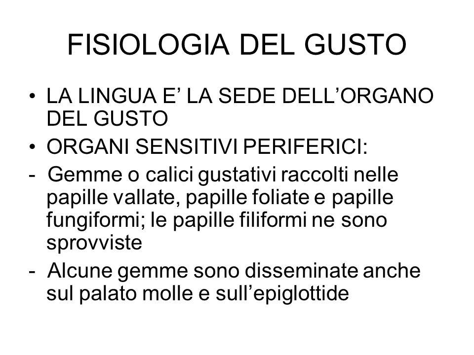 FISIOLOGIA DEL GUSTO LA LINGUA E' LA SEDE DELL'ORGANO DEL GUSTO