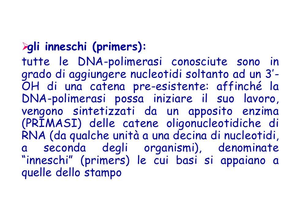 gli inneschi (primers):